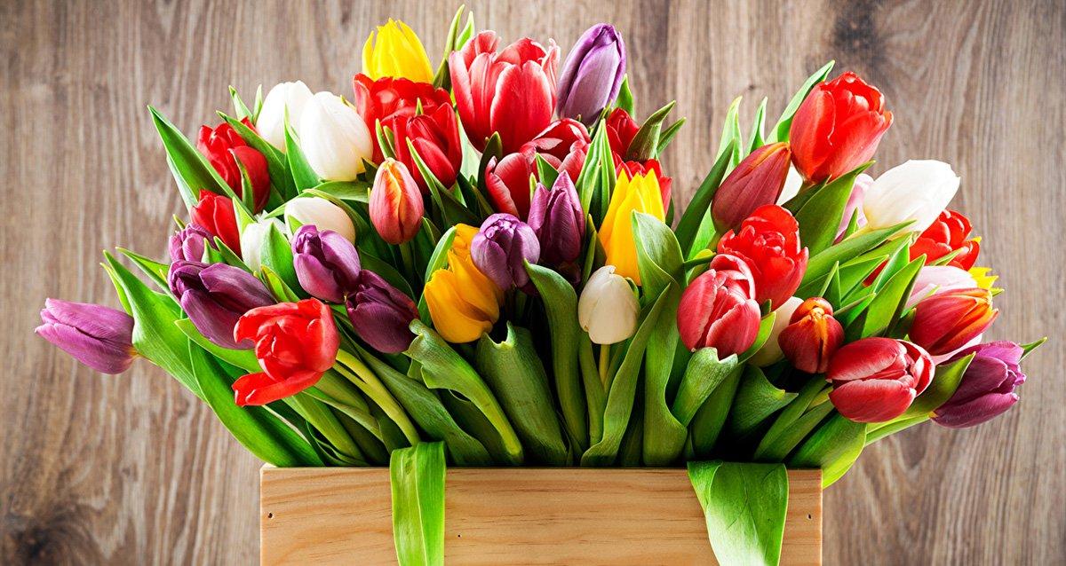 Свежие тюльпаны к 8 марта! От 29 р. за шт.