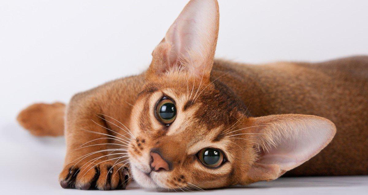 -50% на всемирную выставку кошек