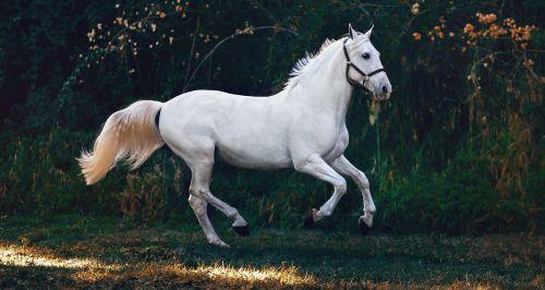 Где покататься на лошадях в Москве