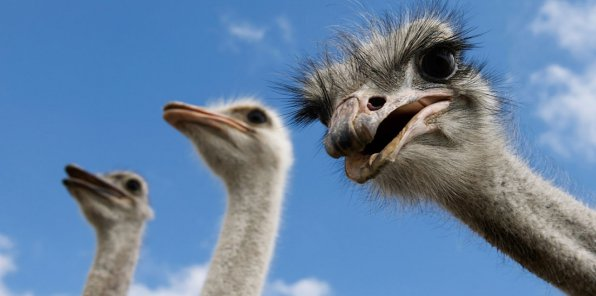 -51% на посещение страусиной фермы