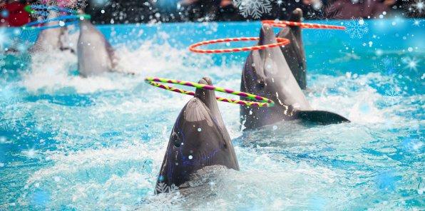 -50% на шоу дельфинов «Снежный город»