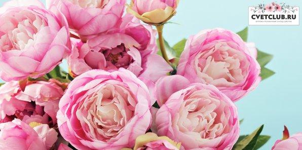 23 р. за розу от cvetclub.ru