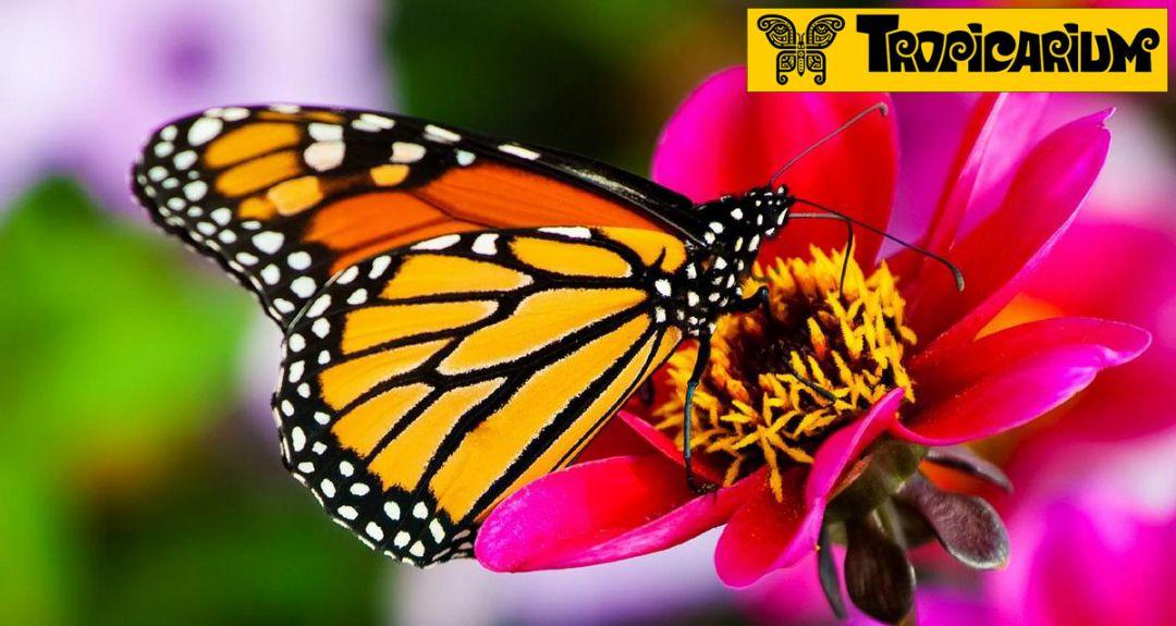 Скидка 50% на выставку тропических бабочек