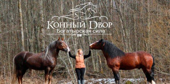 Скидки до 65% на конные прогулки на Владимирских тяжеловозах