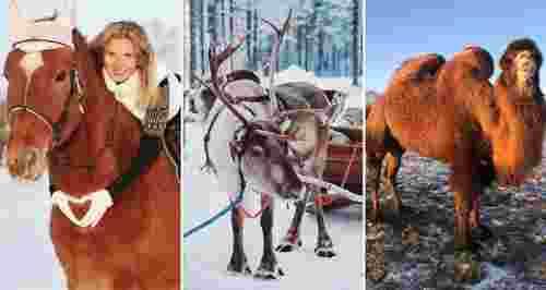 Скидки до 50% в конном клубе и ферме животных «Авенсис»
