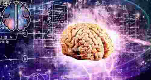 Скидки до 51% на билеты на выставку «Мозг: Вселенная внутри нас»
