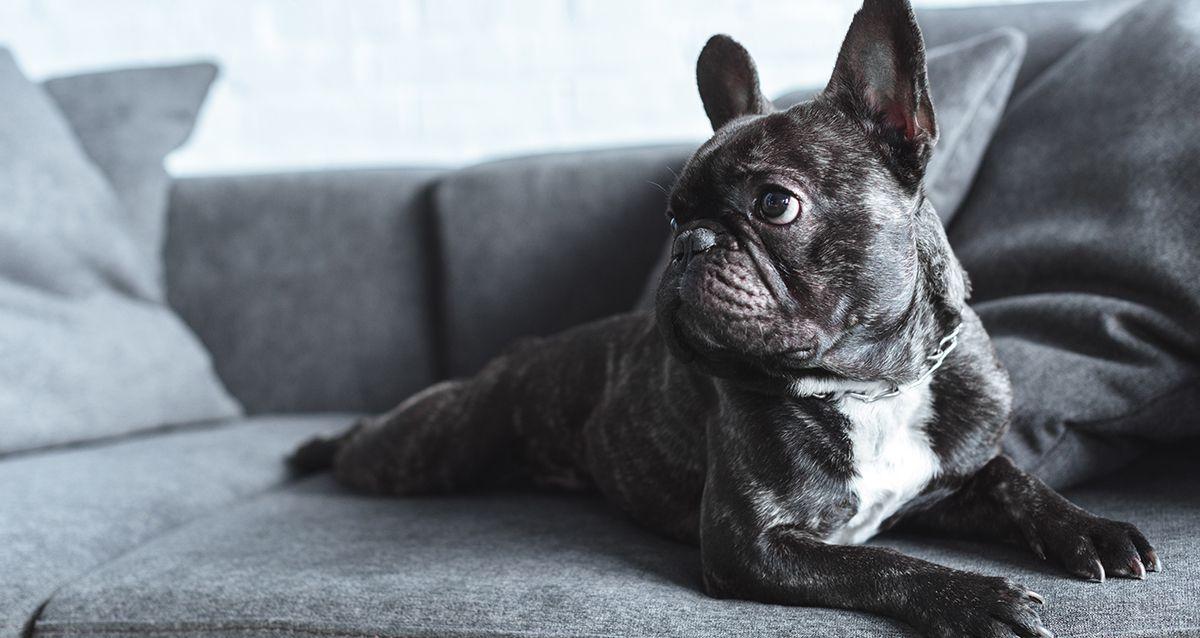 Что нужно знать, если ты заводишь собаку