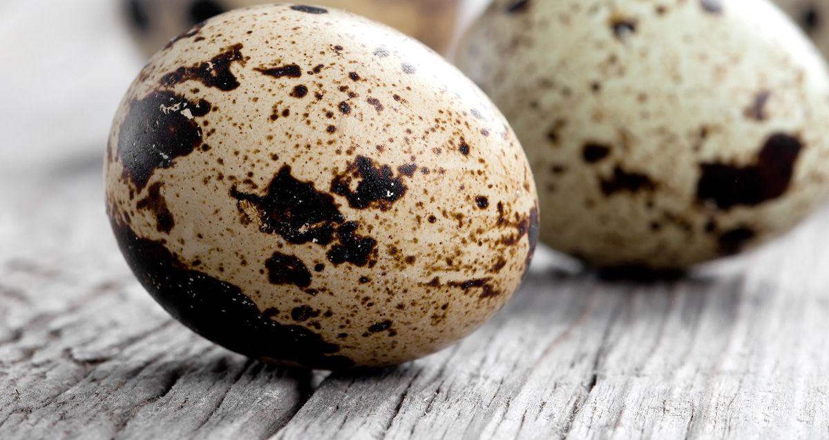 Перепелиные яйца: польза и рецепты
