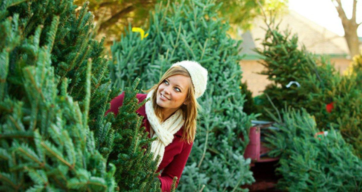В центре праздника: Как выбрать новогоднюю елку