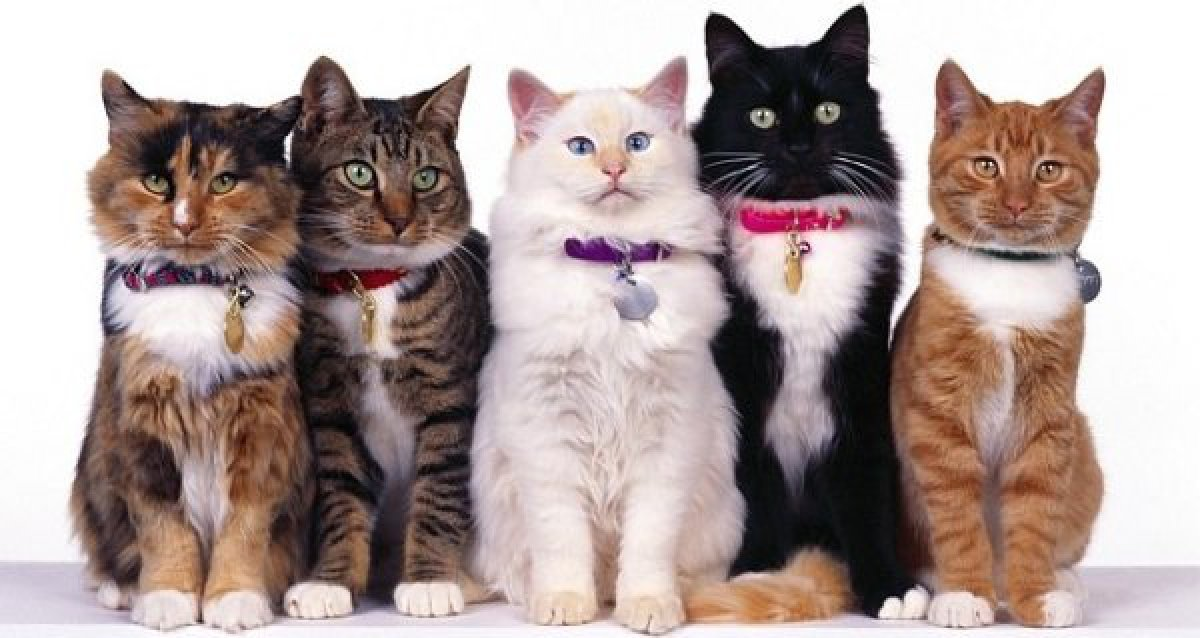 Любите кошек? Вам на международную выставку «Кошки Петербурга» в ТРК «Питерлэнд»! Билеты за полцены — 50 р. за детский, 100 р. за взрослый