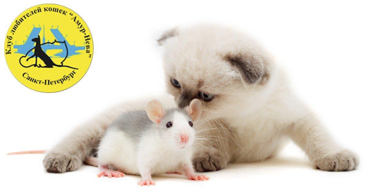 Любите животных? Тогда вам на выставку кошек и грызунов в ТРК «Питерлэнд»! 50 р. за детский билет, 100 р. за взрослый