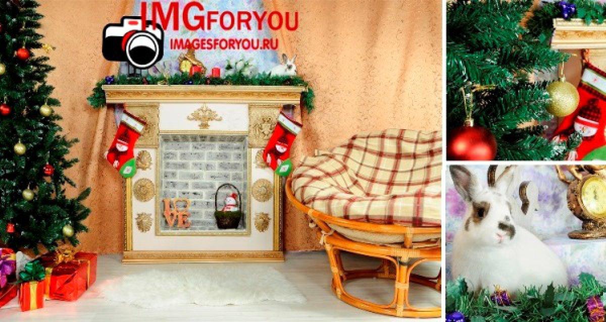 Подарочный сертификат, макияж, костюмы, кролик, интерьеры, выездная и студийная съемка! Новогодняя фотосессия за 750 р.